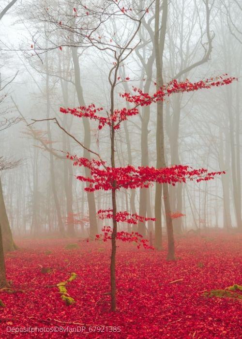 Baum am Rand